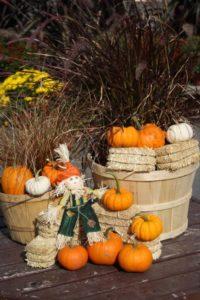 Fall ornamentals