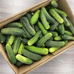 Chub cucumbers in bulk